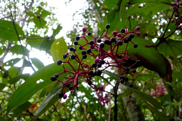 dalton berries.tif